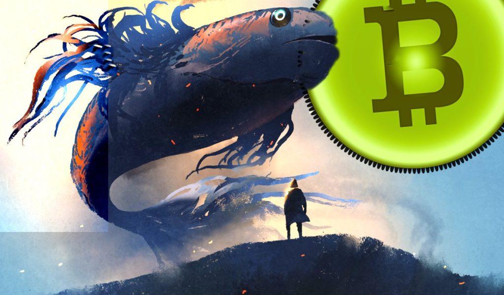 Baleias compraram 90.000 BTC aproveitando a queda do Bitcoin