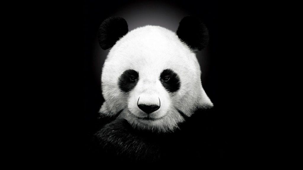 HashPanda (PANDA)